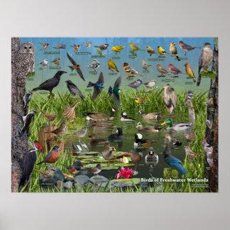Poster Oiseaux des marécages d'eau douce