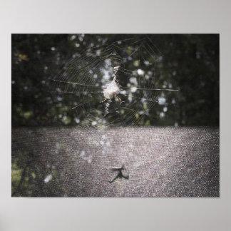 Poster Ombre du tisserand de globe - photo d'araignée