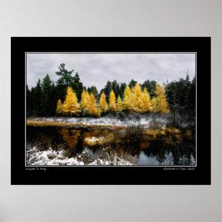 Poster Or final d'automnes - affiche de marais de