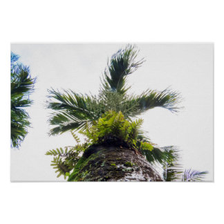 Poster Palmier tropical