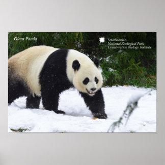 Poster Pandas géants de Smithsonien | dans la neige