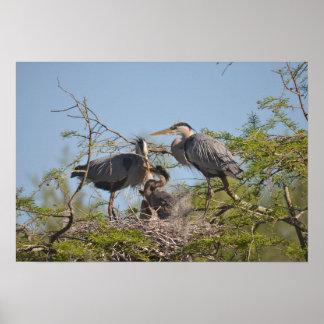 Poster Papier d'affiche gris de valeur de photo de nid de
