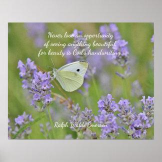 Poster Papillon de blanc de chou