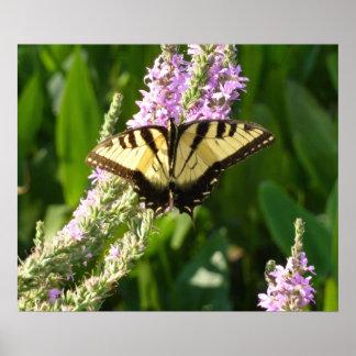 Poster Papillon de machaon sur les fleurs sauvages