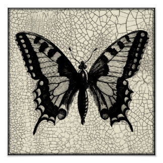 Poster Papillon noir et blanc sur l'arrière - plan criqué