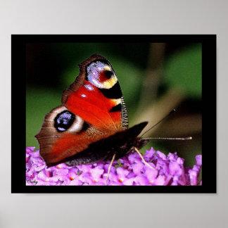 Poster papillon œil de paon