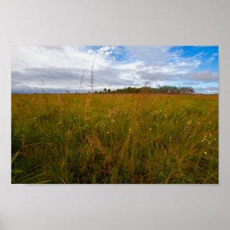 Poster Parc d'état de conserve de prairie de Kissimmee,