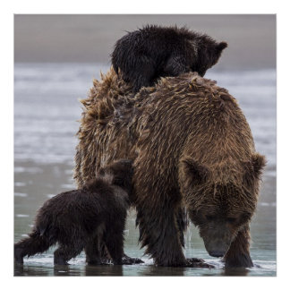 Poster Parc national de Clark de lac bear de Brown |