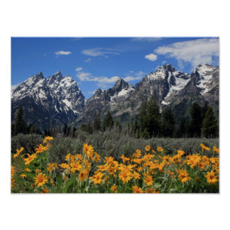 Poster Parc national grand de Teton