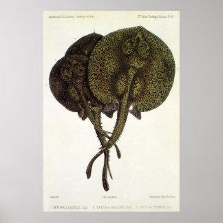 Poster Pastenagues vintages de rayons de Sting, animaux
