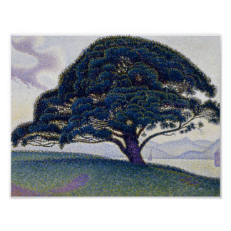 Poster Paul Signac - le pin de Bonaventure