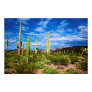 Poster Paysage de cactus de désert, Arizona