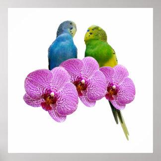 Poster Perruche avec l'orchidée pourpre