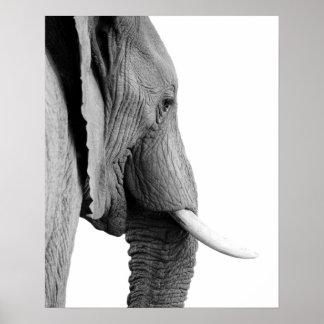 Poster Photo animale africaine sauvage d'éléphant noir et
