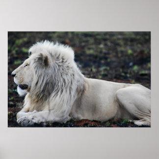 Poster Photo blanche africaine de profil de lion