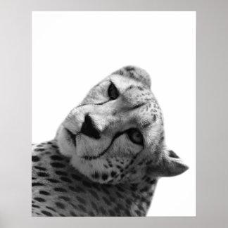 Poster Photo blanche noire d'animal de jungle de léopard