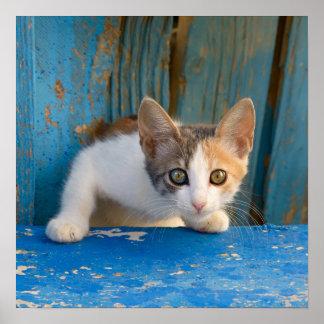 Poster Photo curieuse drôle de yeux de calicot de chaton