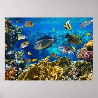 Poster Photo d'un poisson tropical sur un récif coralien