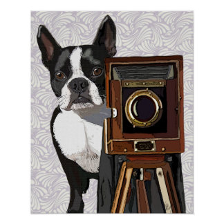 Poster Photographe de Boston Terrier