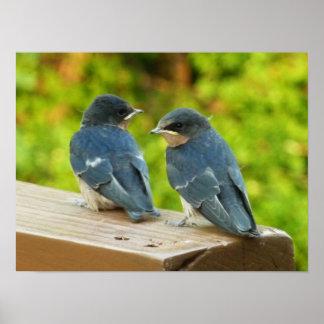 Poster Photographie d'oiseau de nature d'hirondelles de