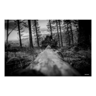 Poster Photographie originale : Au delà de l'arbre tombé