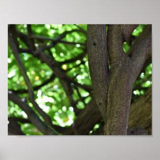 Poster Photographie verte de nature d'arbre de pergola de