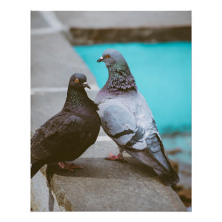 Poster Pigeons