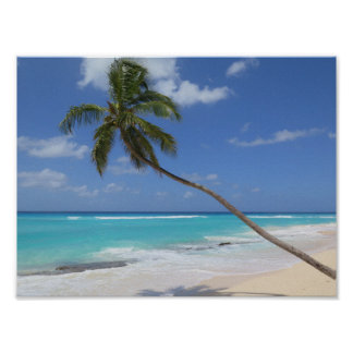 Poster Plage la Caraïbe Barbade de palmier