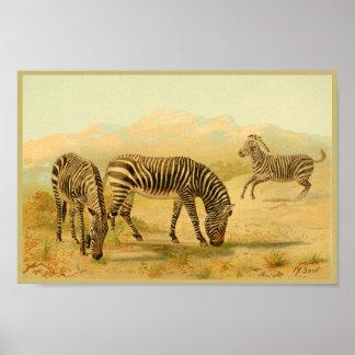 Poster Plaines animales vintages d'Africain d'impression