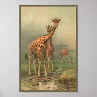 Poster Plaines vintages d'Africain d'impression de