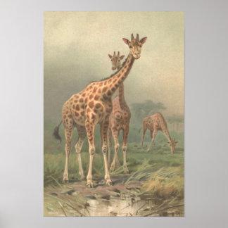 Poster Plaines vintages d'Africain d'impression de la
