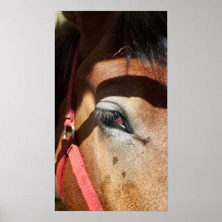 Poster Plan rapproché de cheval à l'Exposition
