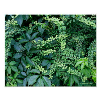 Poster plantes du jardin de Ken