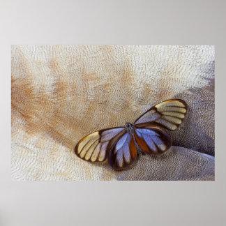 Poster plume égyptienne d'oie de papillon de Verre-aile
