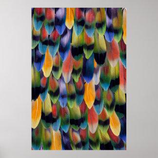 Poster Plumes colorées de perroquet de perruche