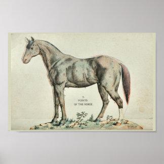 Poster Points de la copie vintage d'anatomie de cheval