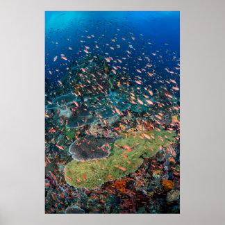 Poster Poissons nageant au-dessus du récif