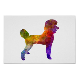 Poster Poodle 01 in watercolor