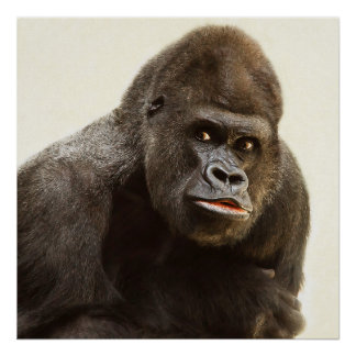 Poster Portrait de gorille de Silverback