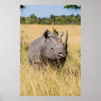 Poster Portrait de rhinocéros noir