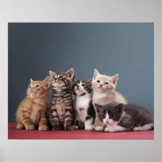 Poster Portrait du groupe de chatons