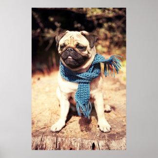 Poster Portrait mignon de chien de carlin avec l'écharpe