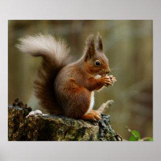 Poster Pose d'écureuil