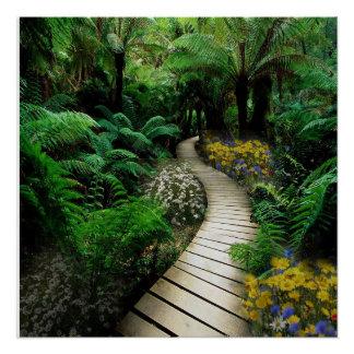 Poster Promenade magnifique par une forêt de fougère