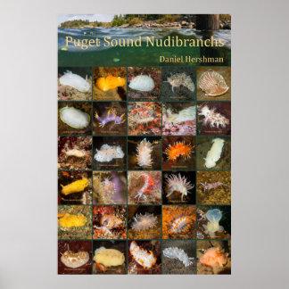 Poster Puget Sound Nudibranchs