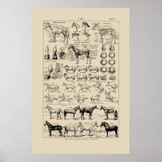 Poster Races françaises vintages de cheval et affiche de
