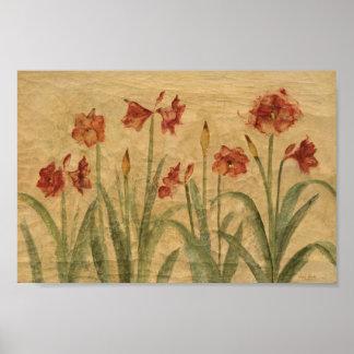 Poster Rangée d'amaryllis rouge