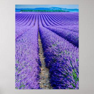 Poster Rangées de lavande, Provence, France
