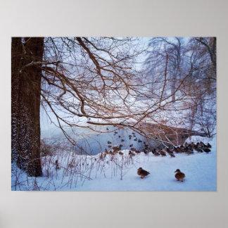 Poster Rassemblement de canards autour d'un étang congelé