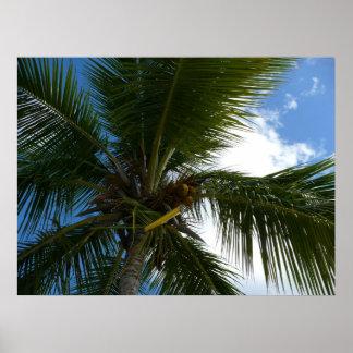 Poster Recherche à la nature tropicale de palmier de noix